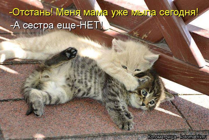 Котоматрица: -Отстань! Меня мама уже мыла сегодня! -А сестра еще-НЕТ!