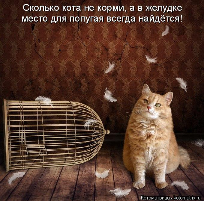 Котоматрица: Сколько кота не корми, а в желудке место для попугая всегда найдётся!
