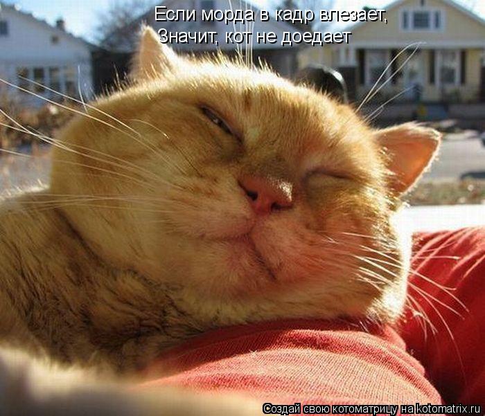 Котоматрица: Если морда в кадр влезает, Значит, кот не доедает