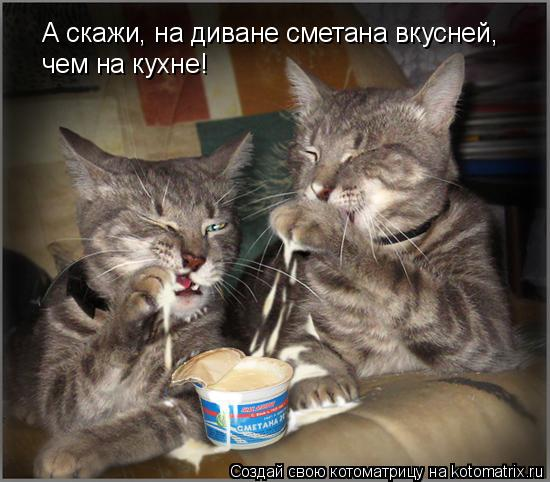 Котоматрица: А скажи, на диване сметана вкусней,  чем на кухне!
