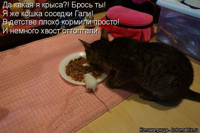 Котоматрица: Да какая я крыса?! Брось ты! Я же кошка соседки Гали! В детстве плохо кормили просто! И немного хвост оттоптали.