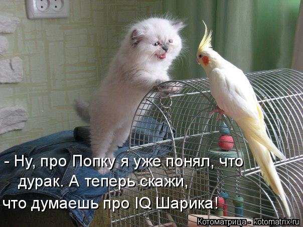 Котоматрица: - Ну, про Попку я уже понял, что  дурак. А теперь скажи,  что думаешь про IQ Шарика!