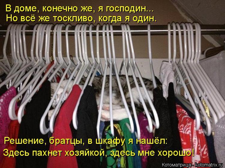 Котоматрица: В доме, конечно же, я господин... Но всё же тоскливо, когда я один. Решение, братцы, в шкафу я нашёл: Здесь пахнет хозяйкой, здесь мне хорошо!