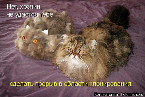 Котоматрица: Нет, хозяин, не удастся тебе сделать прорыв в области клонирования.