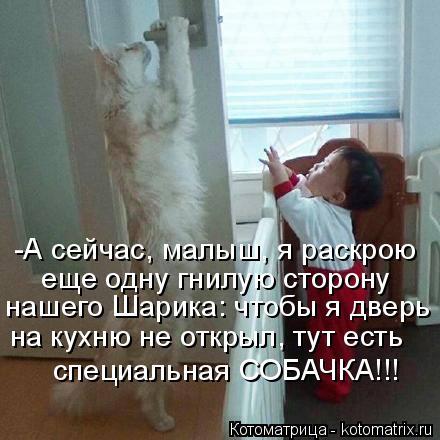 Котоматрица: -А сейчас, малыш, я раскрою  еще одну гнилую сторону нашего Шарика: чтобы я дверь на кухню не открыл, тут есть специальная СОБАЧКА!!!