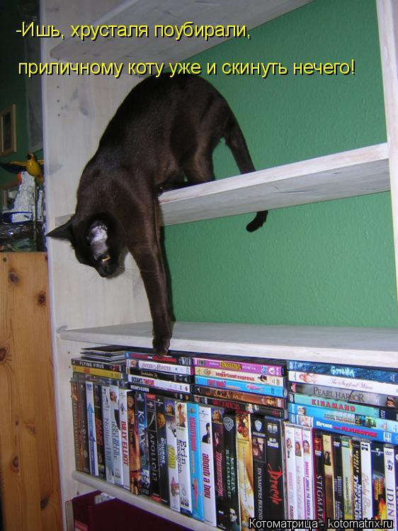 Котоматрица: -Ишь, хрусталя поубирали, приличному коту уже и скинуть нечего!