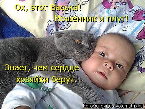 Котоматрица: Ох, этот Васька! Мошенник и плут! Знает, чем сердце  хозяйки берут.
