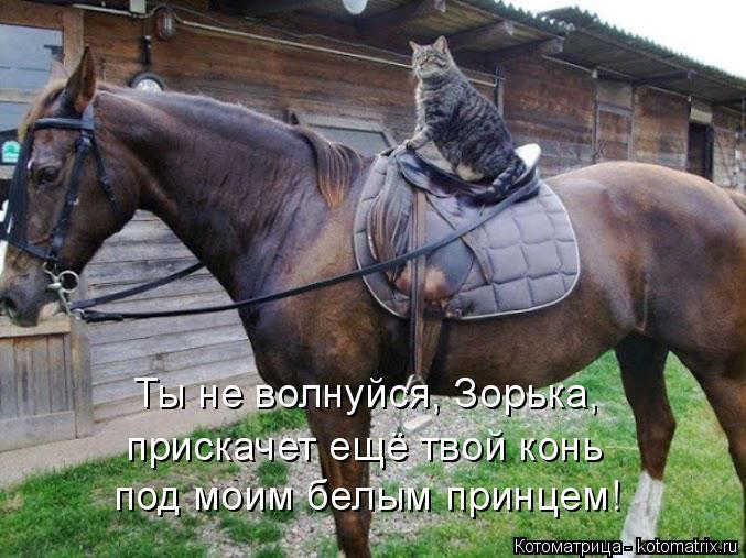 Котоматрица: Ты не волнуйся, Зорька, прискачет ещё твой конь  под моим белым принцем!
