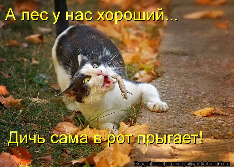 Котоматрица: А лес у нас хороший... Дичь сама в рот прыгает!