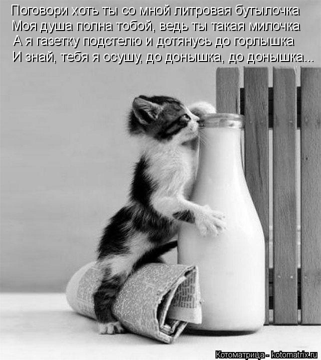 Котоматрица: Поговори хоть ты со мной литровая бутылочка Моя душа полна тобой, ведь ты такая милочка А я газетку подстелю и дотянусь до горлышка И знай, т