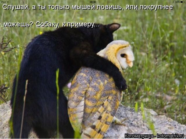 Котоматрица: Слушай, а ты только мышей ловишь, или покрупнее можешь? Собаку, к примеру...