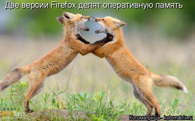 Котоматрица: Две версии Firefox делят оперативную память