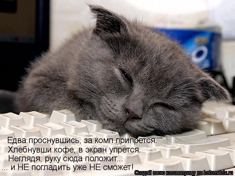 Котоматрица: Едва проснувшись, за комп припрется. Хлебнувши кофе, в экран упрется. Неглядя, руку сюда положит... ... и НЕ погладить уже НЕ сможет!