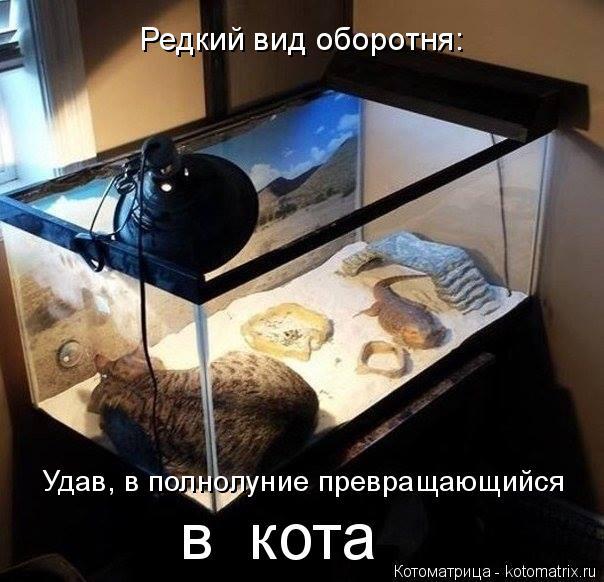 Котоматрица: Редкий вид оборотня: Удав, в полнолуние превращающийся  в  кота