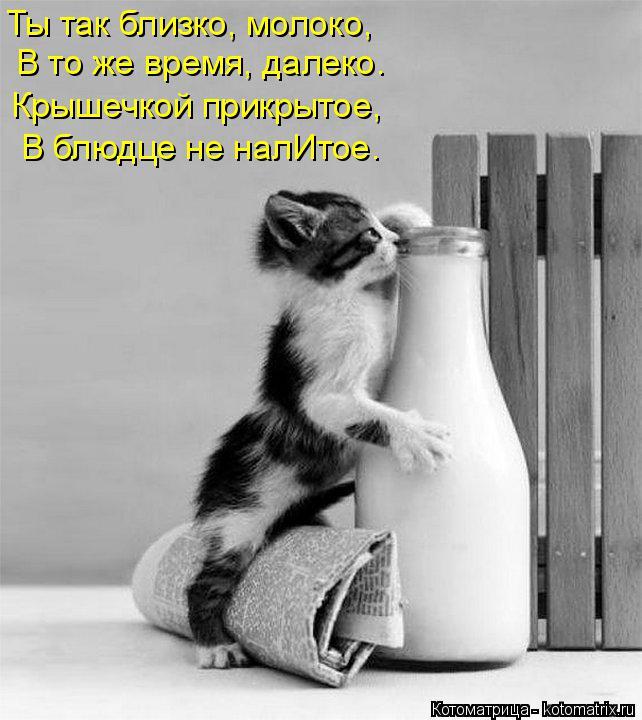 Котоматрица: Ты так близко, молоко, В то же время, далеко. Крышечкой прикрытое, В блюдце не налИтое.