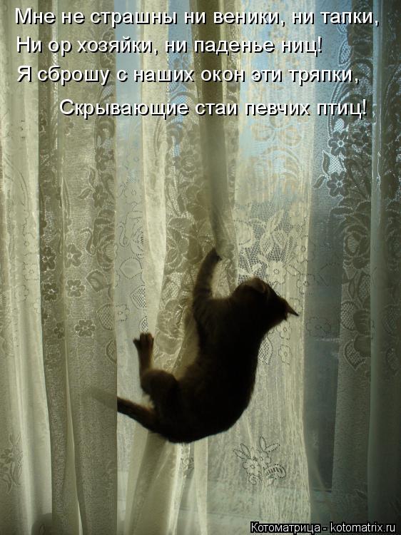 Котоматрица: Мне не страшны ни веники, ни тапки, Ни ор хозяйки, ни паденье ниц! Я сброшу с наших окон эти тряпки, Скрывающие стаи певчих птиц!