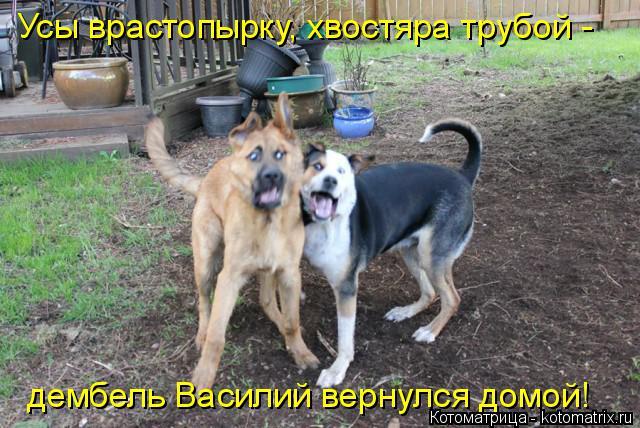 Котоматрица: Усы врастопырку, хвостяра трубой - дембель Василий вернулся домой!