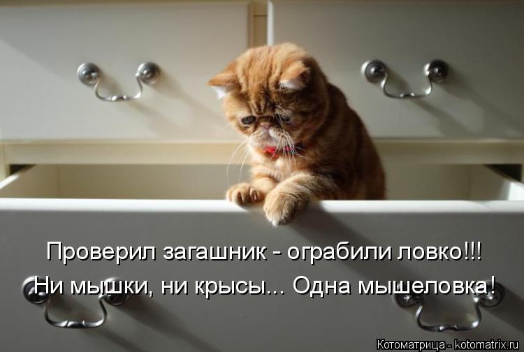Котоматрица: Проверил загашник - ограбили ловко!!! Ни мышки, ни крысы... Одна мышеловка!