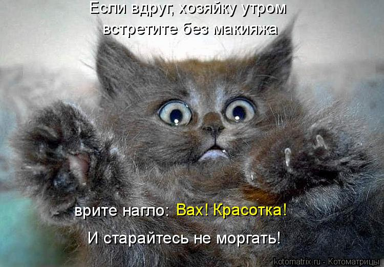 Котоматрица: Если вдруг, хозяйку утром встретите без макияжа врите нагло:  Вах! Красотка! И старайтесь не моргать!