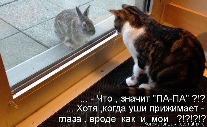 "Котоматрица: ... - Что , значит ""ПА-ПА"" ?!? ... Хотя ,когда уши прижимает - глаза , вроде  как  и  мои   ?!?!?!?!?"