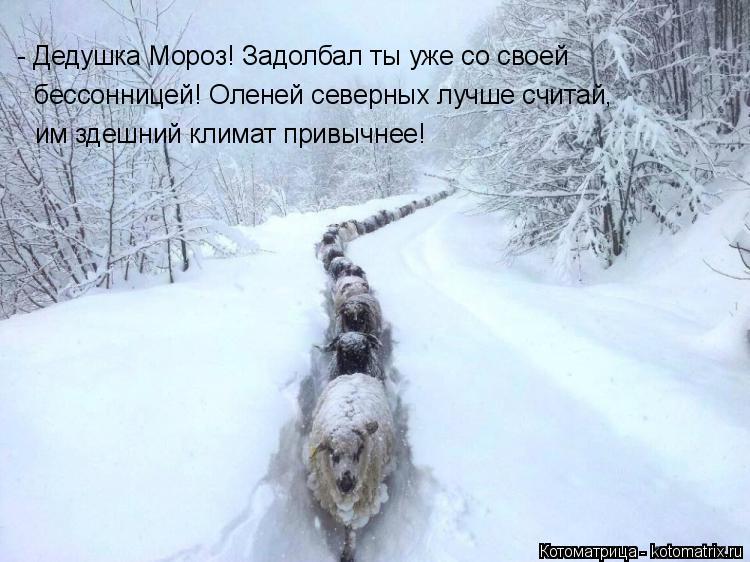 Котоматрица: - Дедушка Мороз! Задолбал ты уже со своей  бессонницей! Оленей северных лучше считай, им здешний климат привычнее!