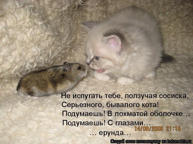 Котоматрица: Не испугать тебе, ползучая сосиска,  Серьезного, бывалого кота! Подумаешь! В лохматой оболочке… Подумаешь! С глазами…  … ерунда…