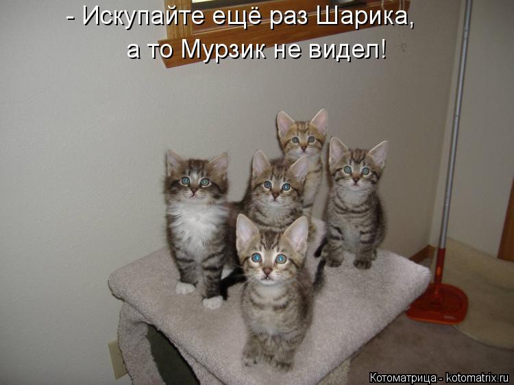 Котоматрица: - Искупайте ещё раз Шарика, а то Мурзик не видел!