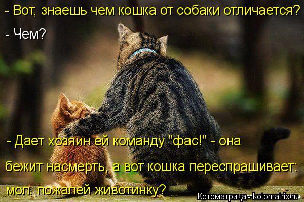 Котоматрица: бежит насмерть, а вот кошка переспрашивает: мол, пожалей животинку? - Вот, знаешь чем кошка от собаки отличается?  - Чем? - Дает хозяин ей коман