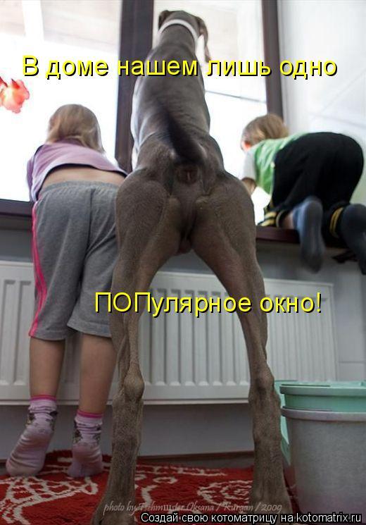 Смотреть фото зофилии 24 фотография