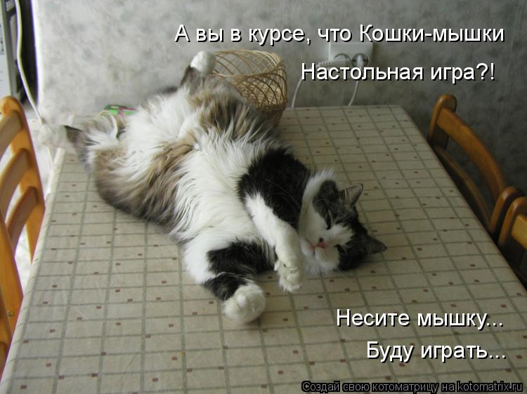 Котоматрица: А вы в курсе, что Кошки-мышки Настольная игра?! Несите мышку... Буду играть...