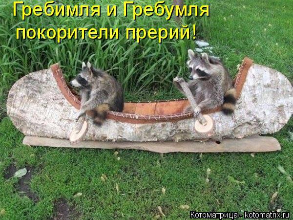 Котоматрица: Гребимля и Гребумля  покорители прерий!