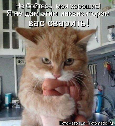 Котоматрица: Не бойтесь, мои хорошие! Я не дам этим инквизиторам вас сварить!