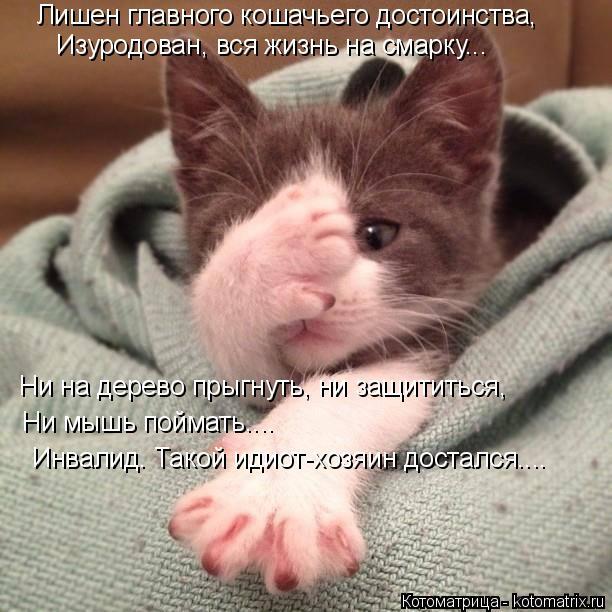 Котоматрица: Лишен главного кошачьего достоинства, Изуродован, вся жизнь на смарку... Ни на дерево прыгнуть, ни защититься, Ни мышь поймать.... Инвалид. Так