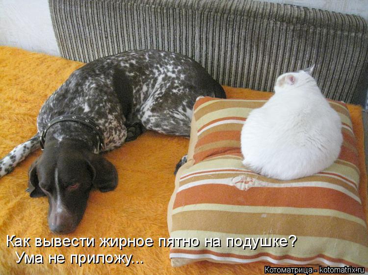 Котоматрица: Как вывести жирное пятно на подушке? Ума не приложу...