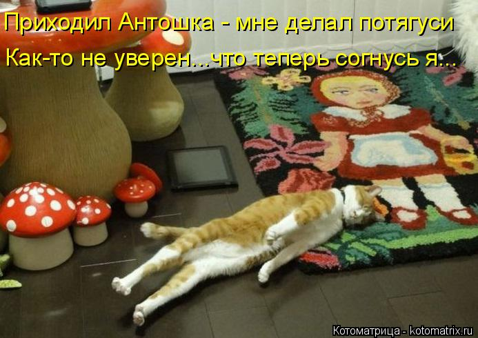 Котоматрица: Приходил Антошка - мне делал потягуси Как-то не уверен...что теперь согнусь я...