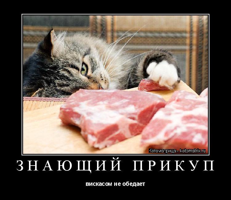 Котоматрица: ЗНАЮЩИЙ ПРИКУП вискасом не обедает