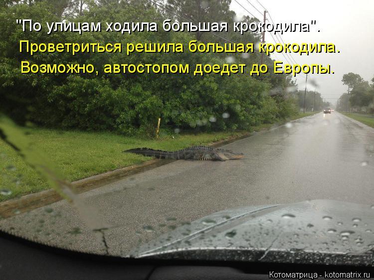 """Котоматрица: """"По улицам ходила большая крокодила"""". Проветриться решила большая крокодила. Возможно, автостопом доедет до Европы."""