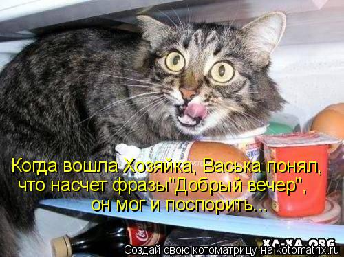 """Котоматрица: Когда вошла Хозяйка, Васька понял, что насчет фразы""""Добрый вечер"""", он мог и поспорить..."""