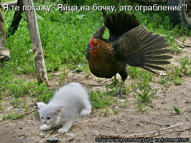 """Котоматрица: Я те покажу """"Яйца на бочку, это ограбление""""!"""