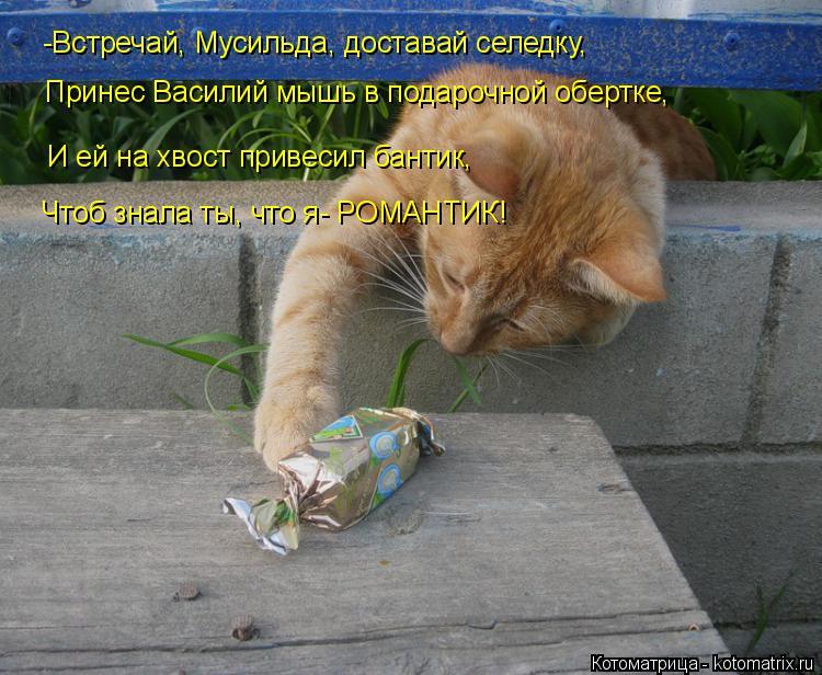 Котоматрица: -Встречай, Мусильда, доставай селедку, Принес Василий мышь в подарочной обертке, И ей на хвост привесил бантик, Чтоб знала ты, что я- РОМАНТИК