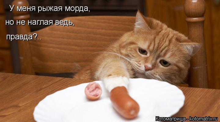 Котоматрица: У меня рыжая морда, но не наглая ведь, правда?..