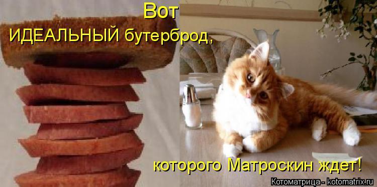 Котоматрица: Вот  ИДЕАЛЬНЫЙ бутерброд, которого Матроскин ждет!