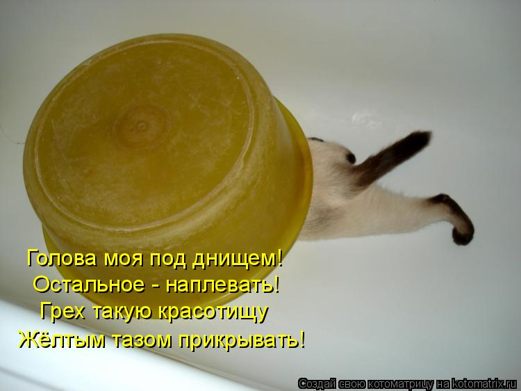 Котоматрица: Голова моя под днищем!   Остальное - наплевать!   Грех такую красотищу  Жёлтым тазом прикрывать!