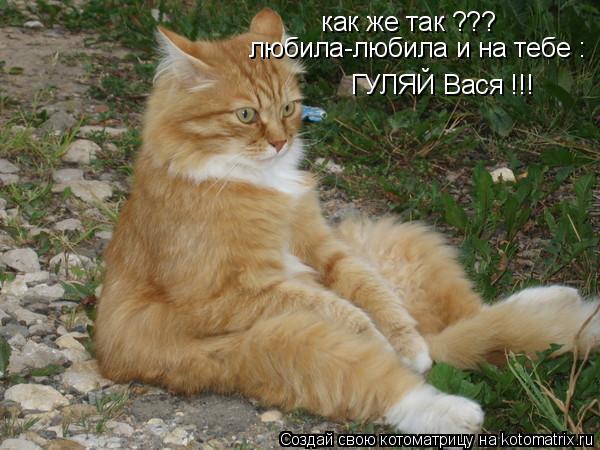 Котоматрица: как же так ??? любила-любила и на тебе : ГУЛЯЙ Вася !!!