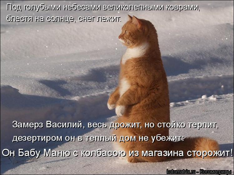 Котоматрица: Под голубыми небесами великолепными коврами, блестя на солнце, снег лежит.  Замерз Василий, весь дрожит, но стойко терпит,  дезертиром он в т