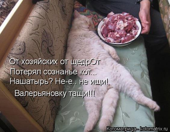 Котоматрица: От хозяйских от щедрОт Потерял сознанье кот... Нашатырь? Не-е.. не ищи! Валерьяновку тащи!!!