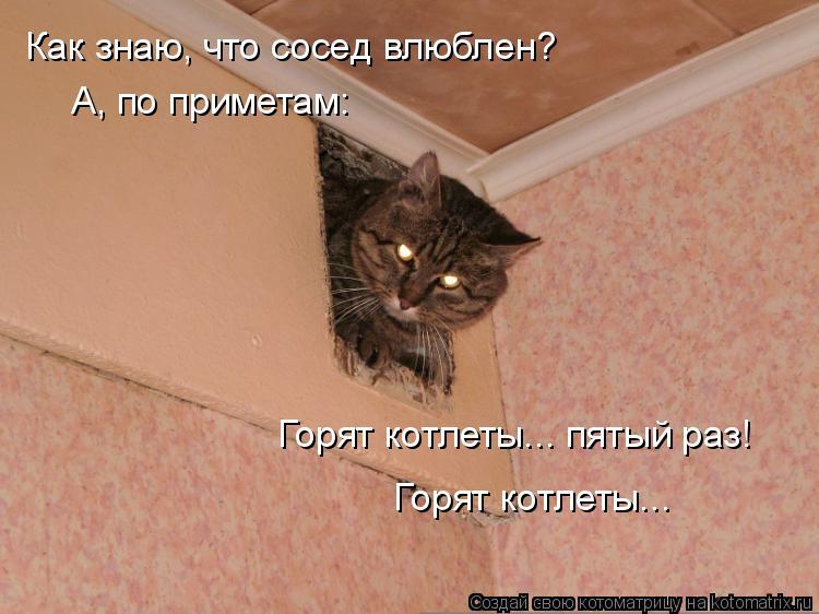 Котоматрица: Как знаю, что сосед влюблен?  А, по приметам: Горят котлеты... пятый раз! Горят котлеты...