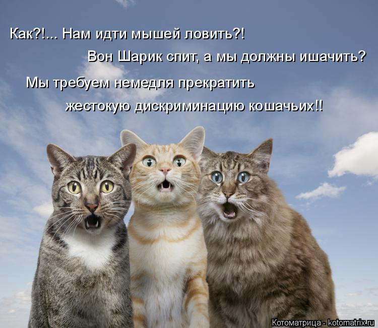Котоматрица: Как?!... Нам идти мышей ловить?! Вон Шарик спит, а мы должны ишачить? Мы требуем немедля прекратить жестокую дискриминацию кошачьих!!