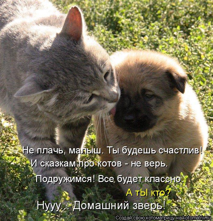 Котоматрица: И сказкам про котов - не верь. Подружимся! Все будет классно. Не плачь, малыш. Ты будешь счастлив! А тЫ кто? Нууу... Домашний зверь!