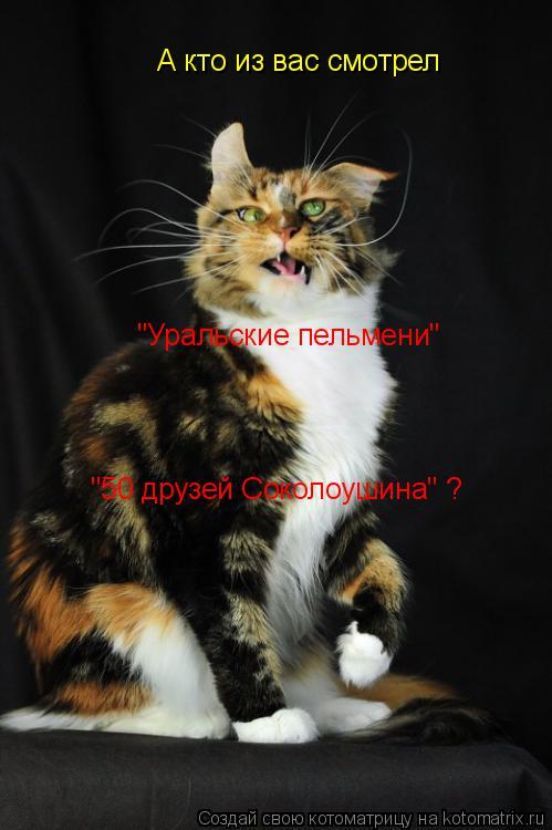 """Котоматрица: А кто из вас смотрел """"Уральские пельмени"""" """"50 друзей Соколоушина"""" ?"""